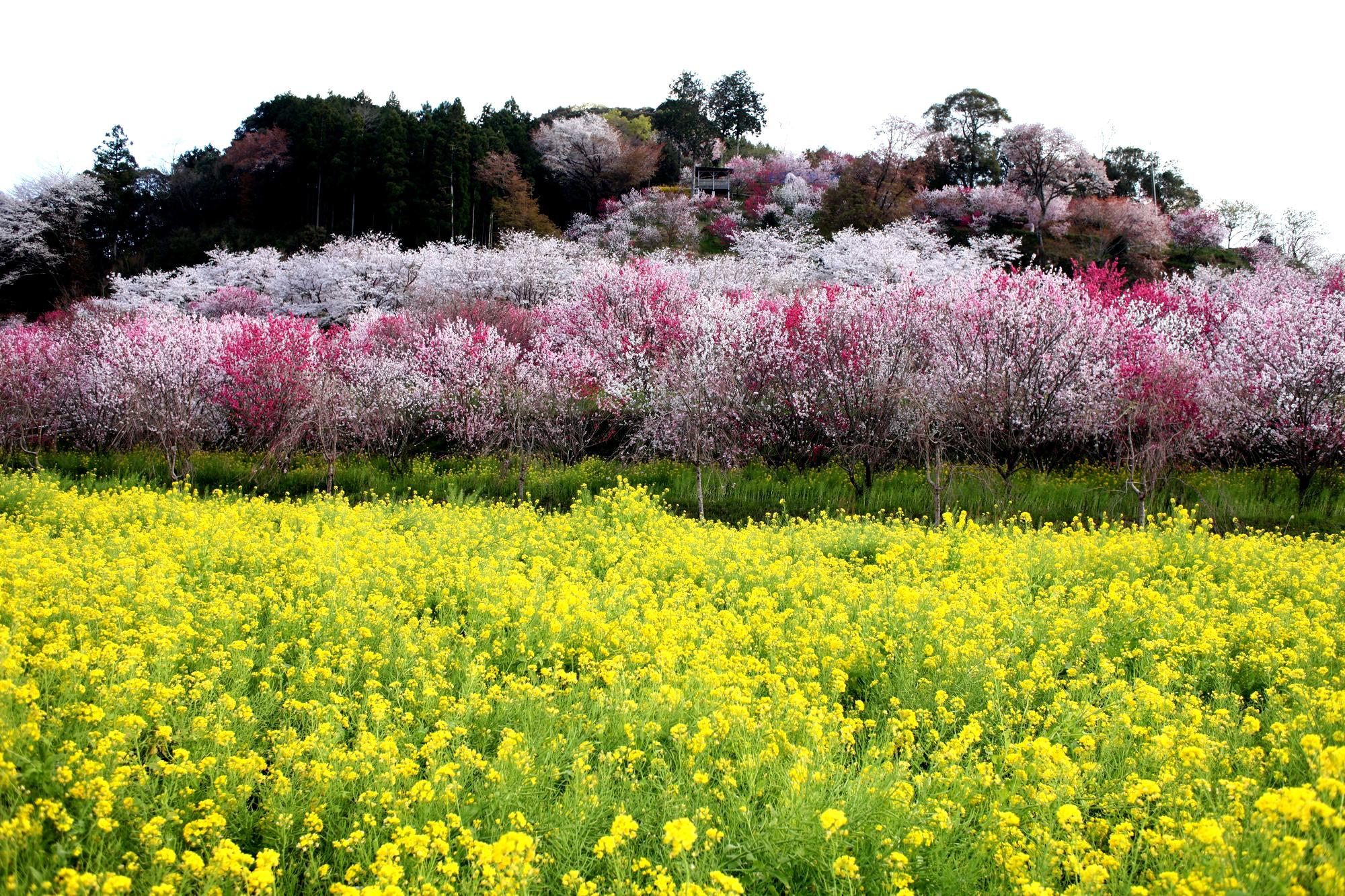 http://shikoku.misawa.co.jp/area_kouchi/%E3%81%AF%E3%81%AA%E3%82%82%E3%82%82%EF%BC%92.jpeg