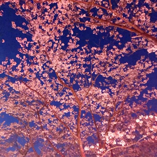 http://shikoku.misawa.co.jp/area_kouchi/3E3D531F-1586-4DC0-A608-AA2B2EE2935D.JPG