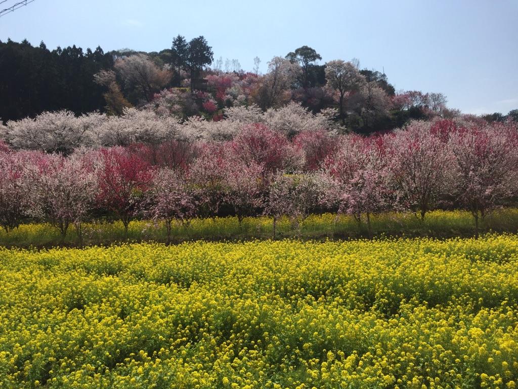 http://shikoku.misawa.co.jp/area_kouchi/IMG_5221.jpg