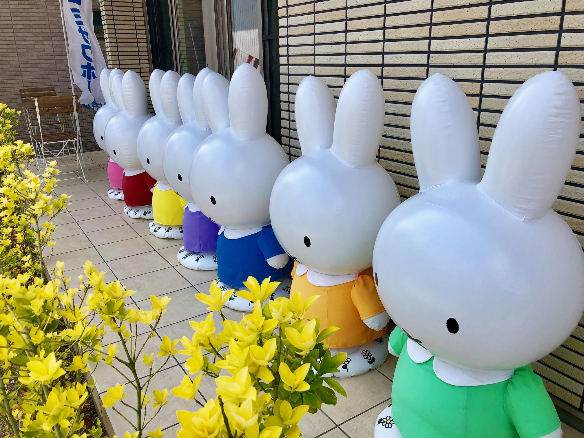 http://shikoku.misawa.co.jp/area_kouchi/IMG_5731.jpg