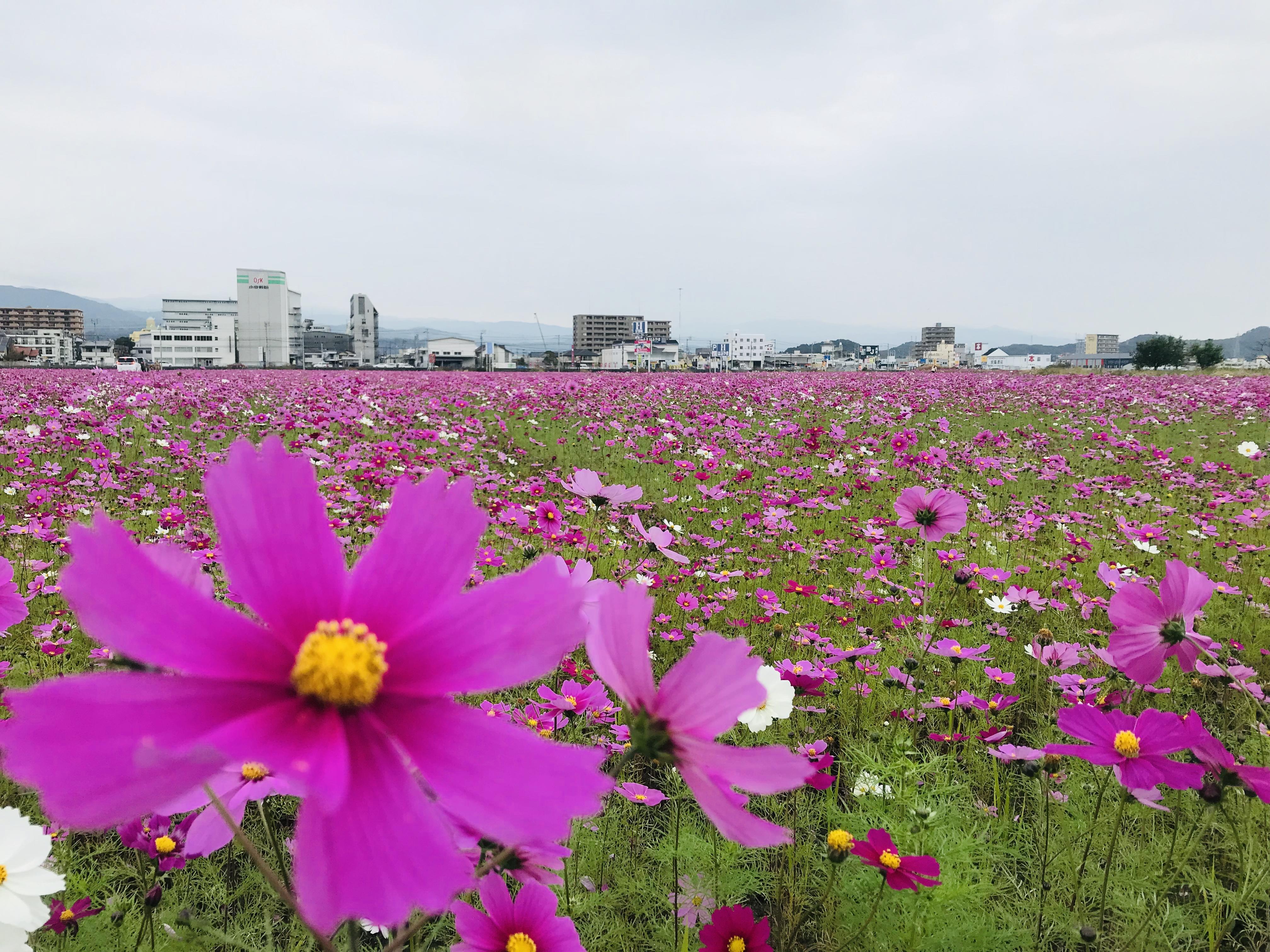 http://shikoku.misawa.co.jp/area_kouchi/image2.jpeg