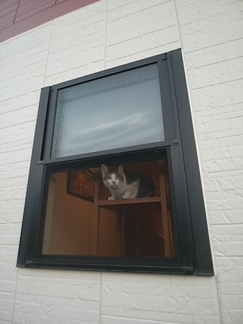 窓ねこ.jpg