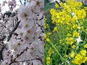 201903春の花.jpg