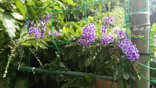 ①庭先の花JPG.JPG