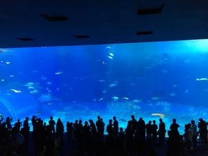 美ら海水族館.jpg