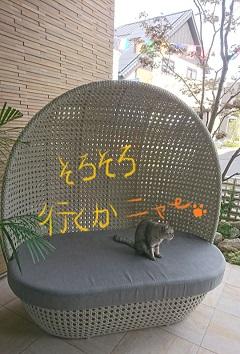 ネコ最後.jpg