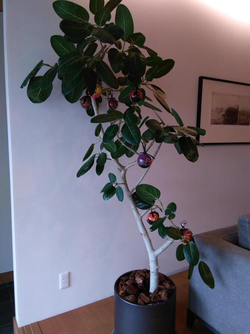 .JPGハロウィン植物.JPG