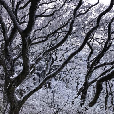 霧氷03.jpg