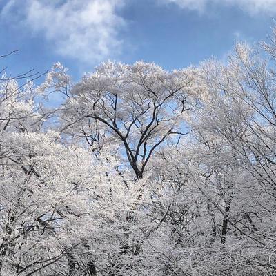 霧氷02.jpg